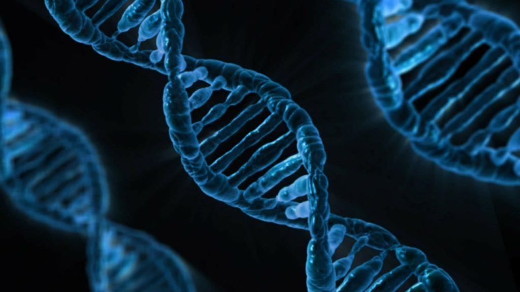 遺伝子解析サービス