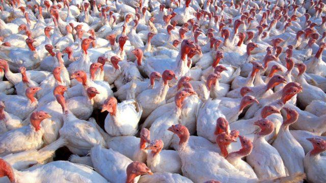 ブログのやる気が無くなっている人たちをイメージさせる鳥の集団