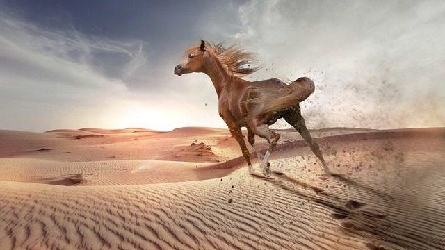嫌なことから全力で逃げ出す馬