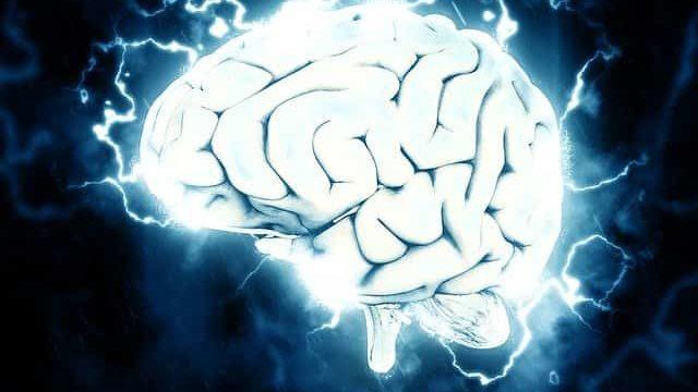 多様な知識や経験を蓄積した頭脳