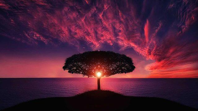 就活の軸をイメージさせる巨木